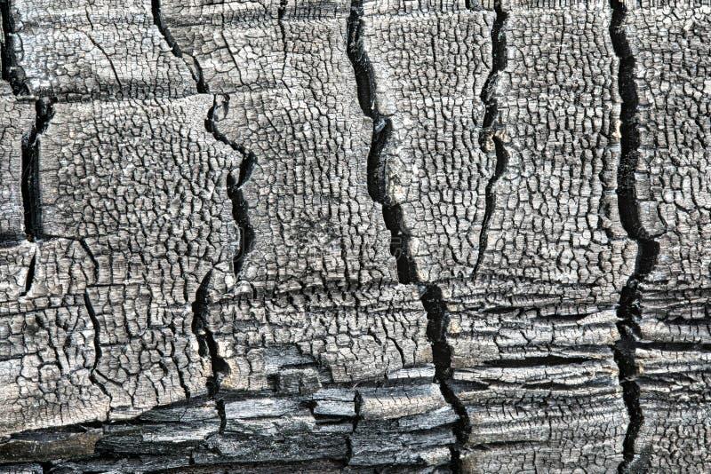 La textura o el fondo del registro de madera carbonizado o quemado fotografía de archivo