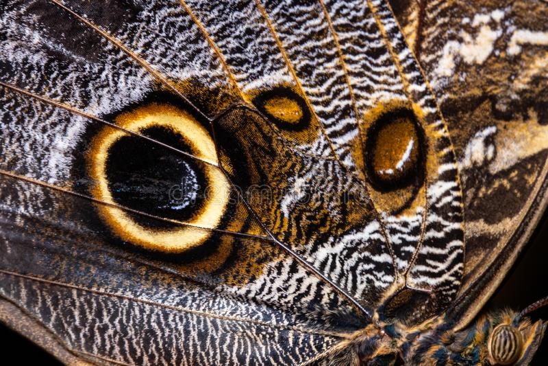 La texture d'aile de papillon, se ferment du détail de l'aile de papillon pour le fond image stock