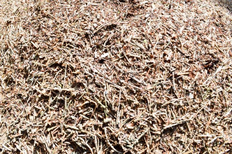 La texture d'une fourmilière brune de forêt naturelle avec des fourmis beaucoup de petits insectes dans la forêt le fond photos libres de droits
