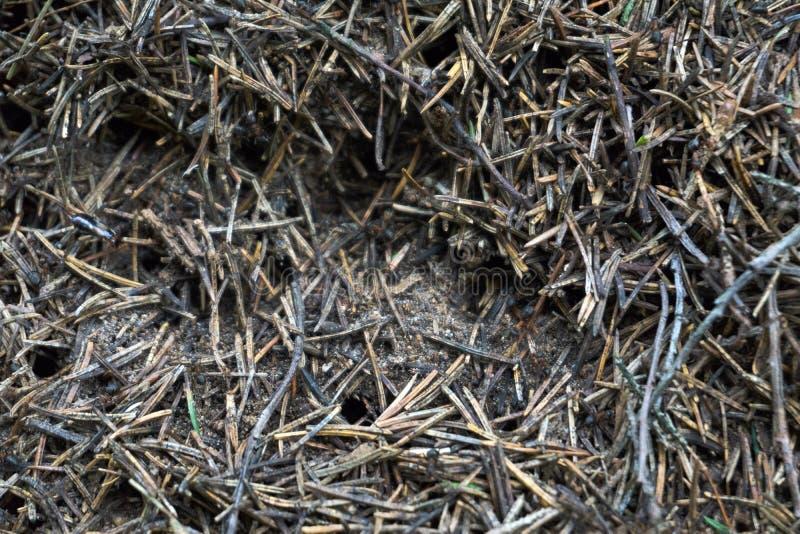 La texture d'une fourmilière brune de forêt naturelle avec des fourmis beaucoup de petits insectes dans la forêt le fond images libres de droits