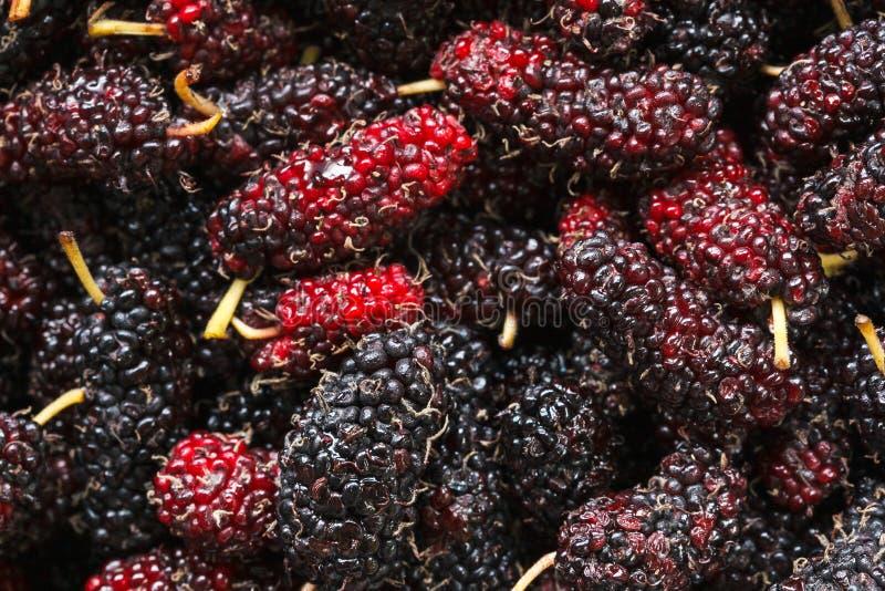 La texture de plan rapproché des mûres fraîches porte des fruits avec l'éclairage naturel image libre de droits