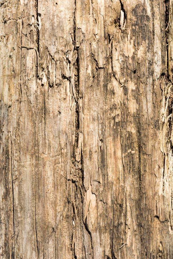 La texture de sèchent le bois criqué superficiel par les agents, fissures le long des fibres des rondins, fond abstrait en gros p photo libre de droits