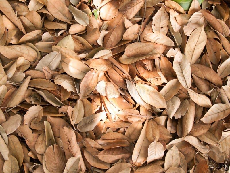 La texture des feuilles sèches emploient pour des fonds d'image image stock