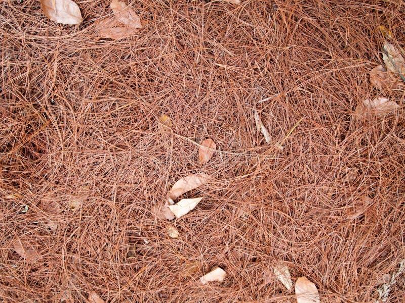 La texture des feuilles sèches emploient pour des fonds d'image photos stock
