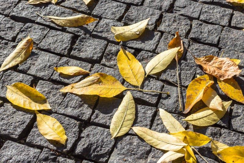 La texture des feuilles sur un fond d'automne photographie stock