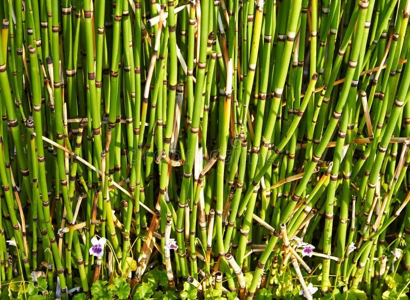 La texture du bambou vert images stock