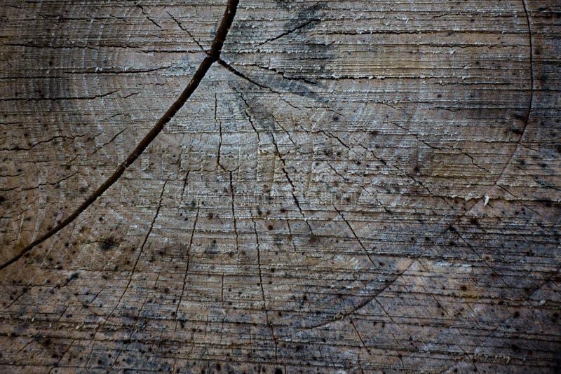 La texture du bois scié images libres de droits