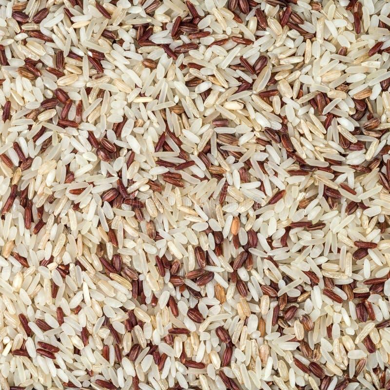 La texture du mélange de différentes variétés de riz dans un cadre carré photos libres de droits