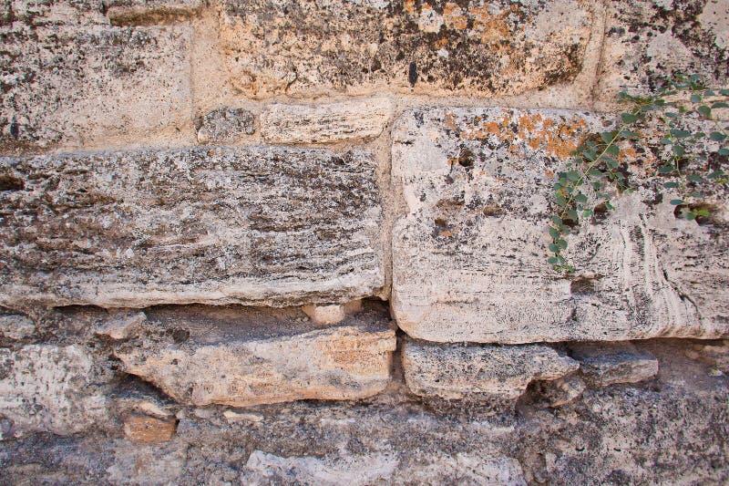 la texture du mur en pierre limestone coquina fond vieux murs image stock image du. Black Bedroom Furniture Sets. Home Design Ideas