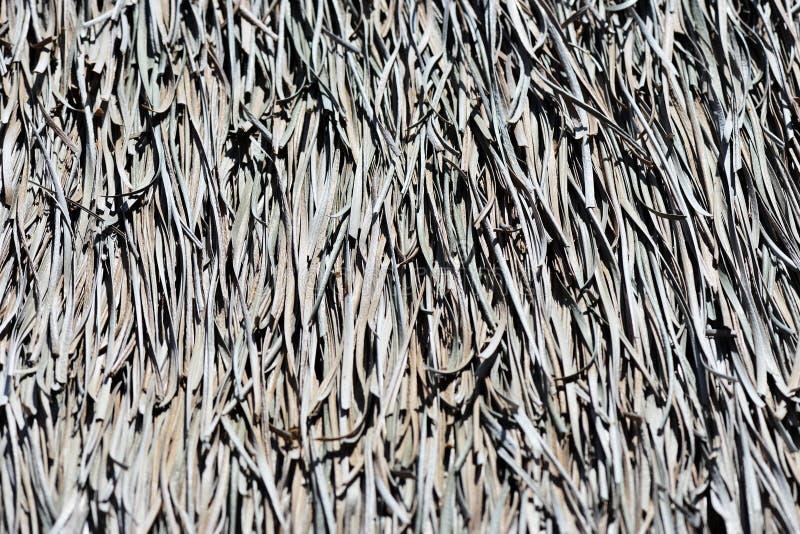 La texture du toit de paume Fond tropical photographie stock libre de droits