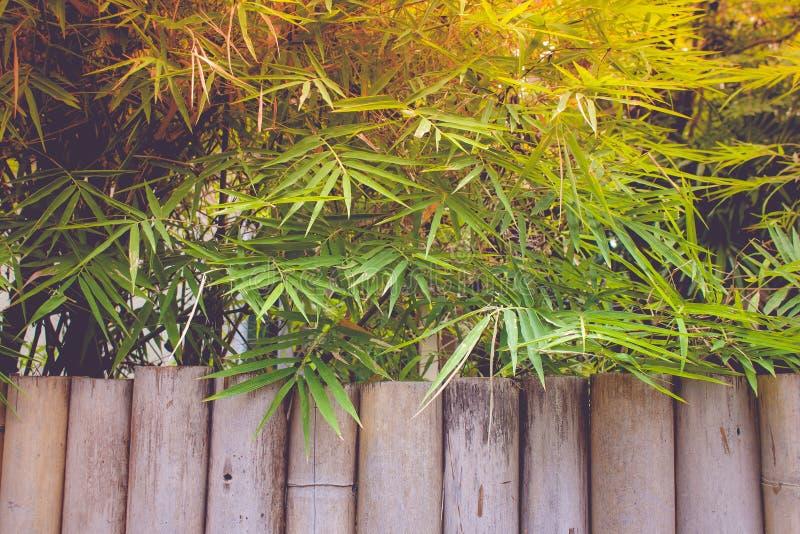 La texture du tronc en bambou avec le bambou laisse le fond image libre de droits
