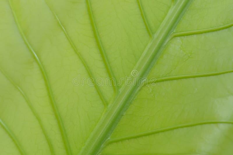 La texture du vert laisse la texture image stock