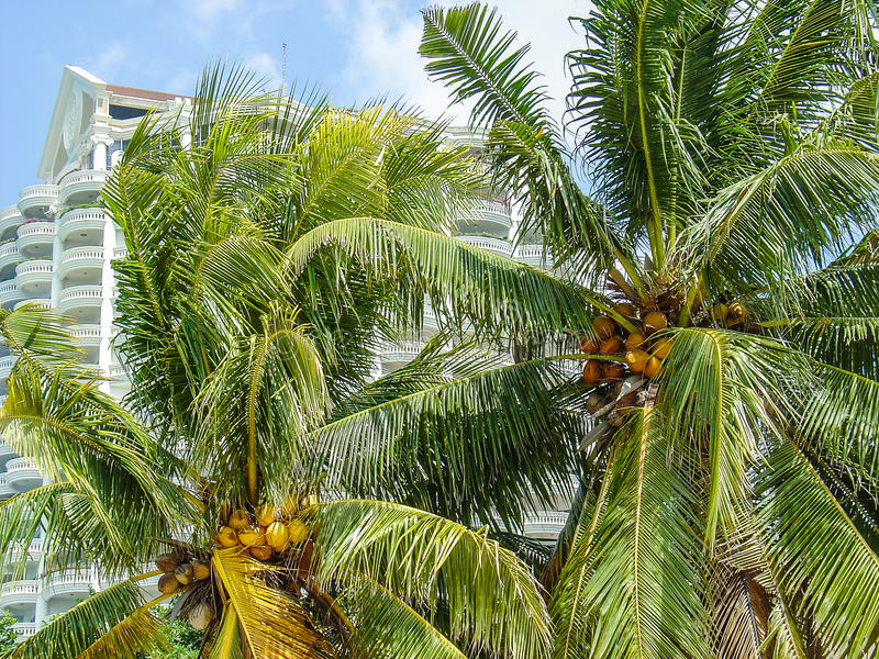 La Thaïlande, arbre tropical photos stock