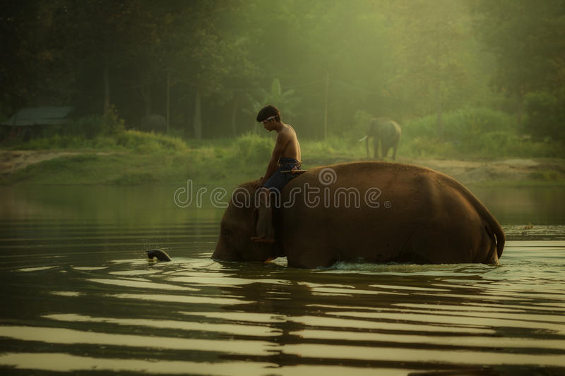 La Thaïlande au parc d'éléphant de mahout de village de Chang à baigner dans un pon photos stock