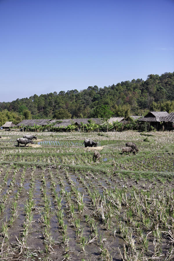 La Thaïlande, Chiang Mai, pinces Luang, villa de Baan de Karen photographie stock libre de droits