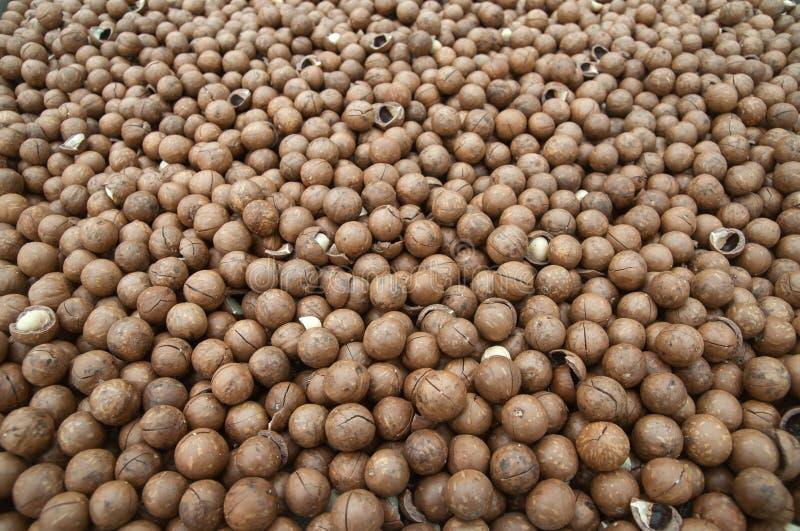 La tierra de la nuez de macadamia con la cáscara que se seca bajo luz del sol Sabiduría local Granja orgánica de Phu Suan Sai, Lo imagenes de archivo