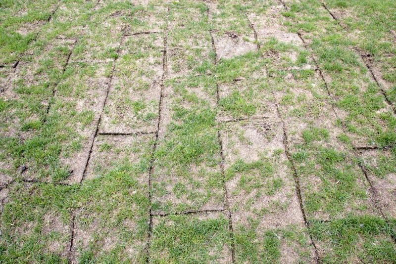 La tierra revelada rueda con la hierba verde, hierba es calidad muy mala, imagen de archivo