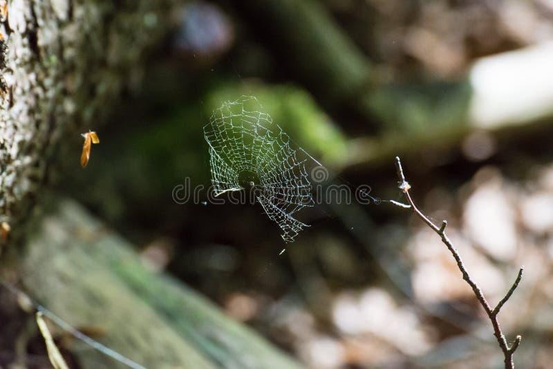 La toile d'araignée d'une araignée croisée miroite au soleil photo libre de droits