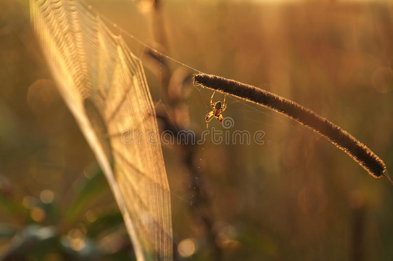 La toile de l'araignée photos stock