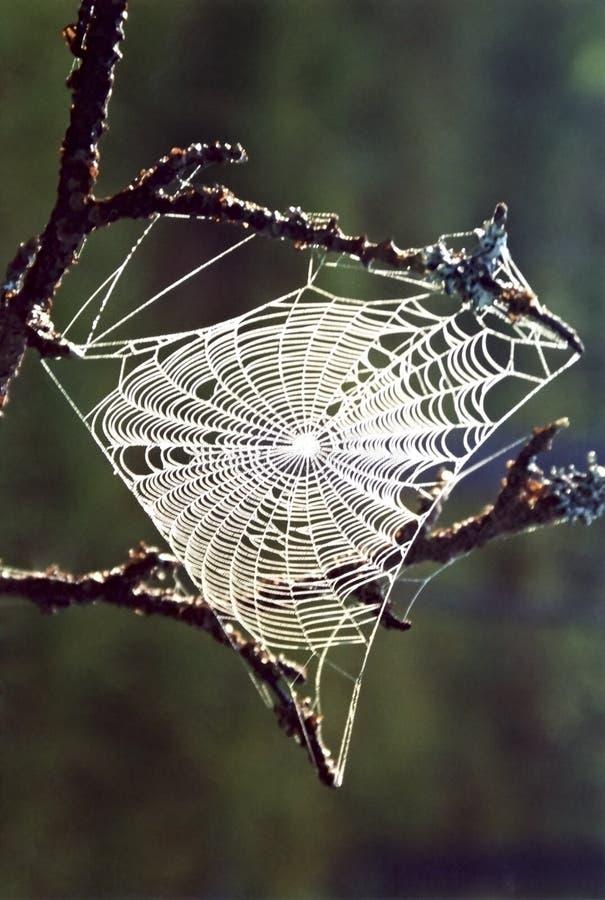 La toile de l'araignée photographie stock libre de droits