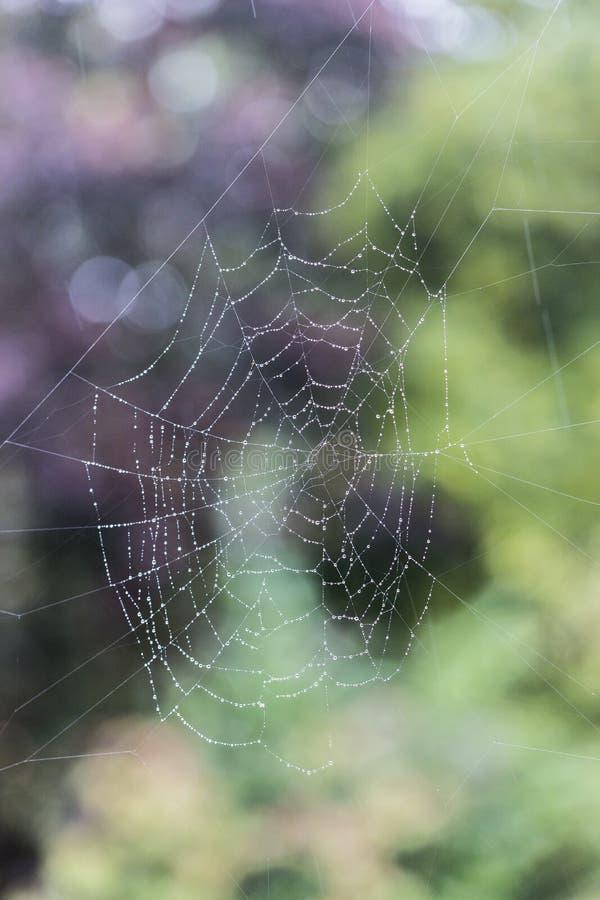 La toile de l'araignée avec des gouttelettes d'eau photo libre de droits