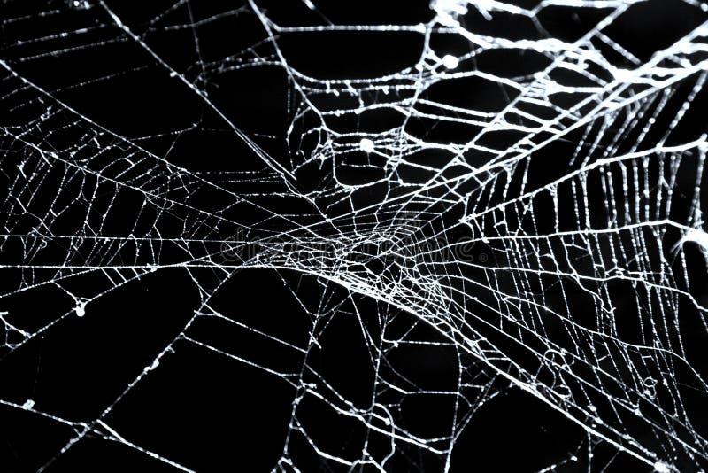 La toile de l'araignée sur le noir photos stock