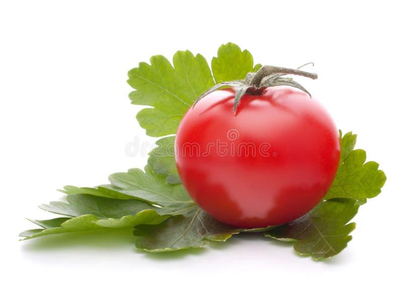 La tomate-cerise et le persil part de la durée immobile photo stock