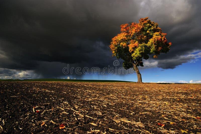 La tormenta de acopio del arce del otoño foto de archivo