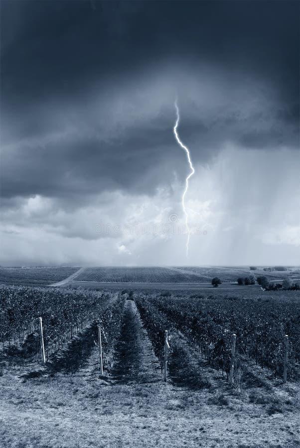 La tormenta golpea el viñedo fotos de archivo libres de regalías