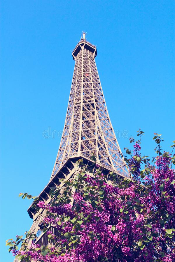 La Torre Eiffel a Parigi, Francia immagini stock libere da diritti