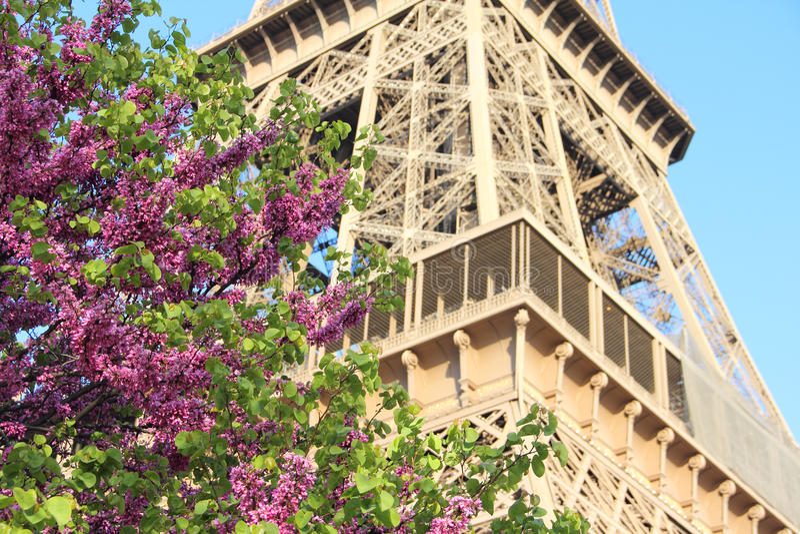 La Torre Eiffel a Parigi, Francia immagine stock libera da diritti