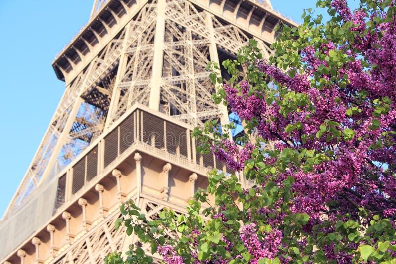 La Torre Eiffel a Parigi, Francia fotografia stock