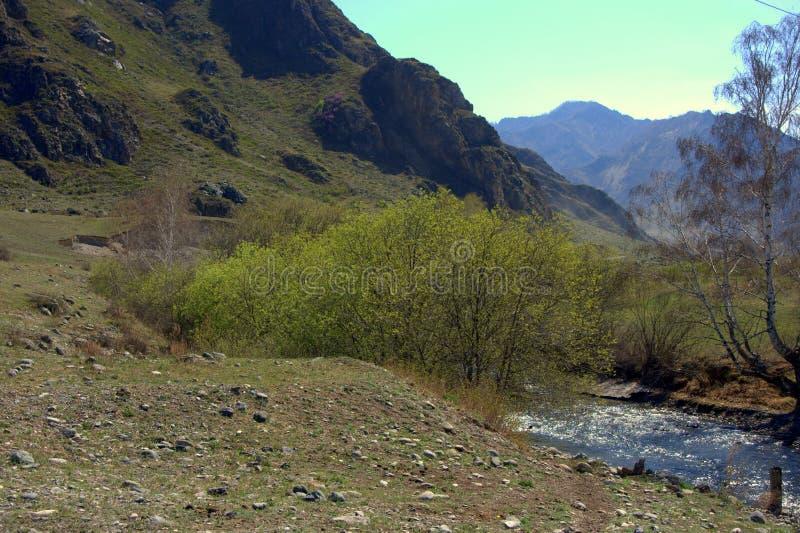 La torrente montano rapida sfocia nella valle fotografia stock libera da diritti