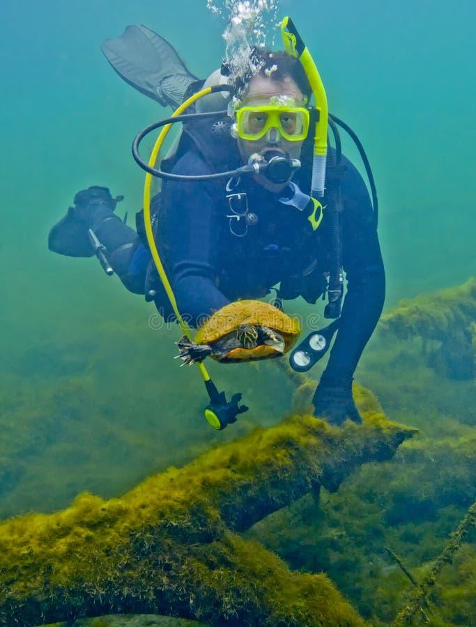 La tortue échappe au plongeur - sources de Morrison photographie stock
