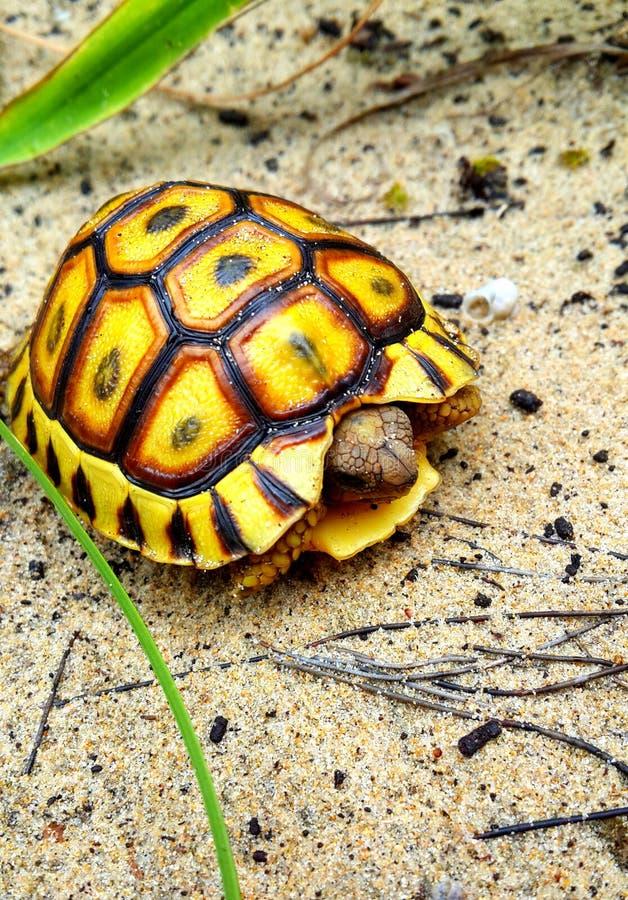 La tortue échouée photo stock