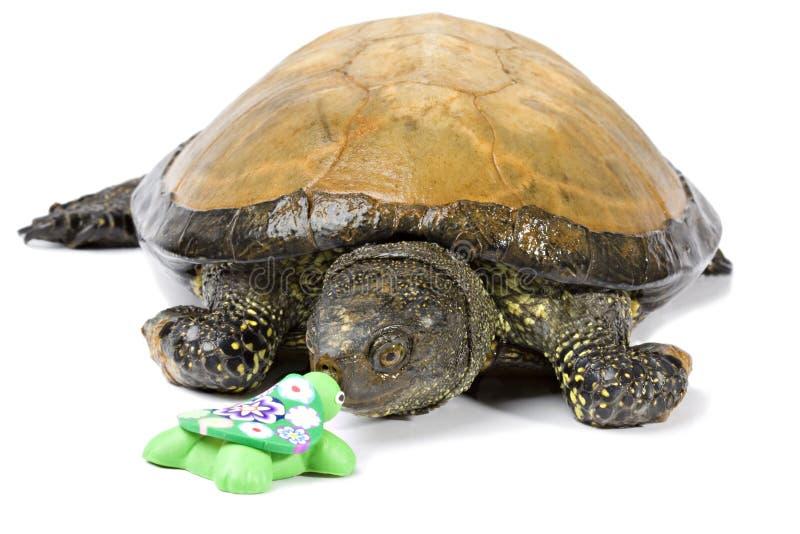 La tortue considère la tortue en céramique fabriquée à la main photographie stock
