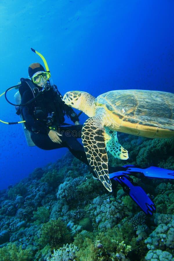 La tortue contacte le plongeur autonome images stock