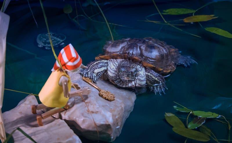 La tortue rencontre Pinocchio et lui donne la touche fonctions étendues images stock