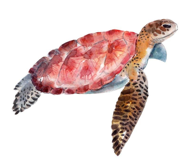 La tortuga, ejemplo de la acuarela aislado en blanco stock de ilustración