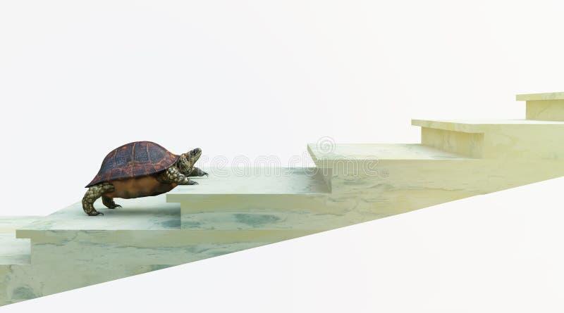 La tortuga móvil quiere subir en la composición del concepto de las escaleras imágenes de archivo libres de regalías