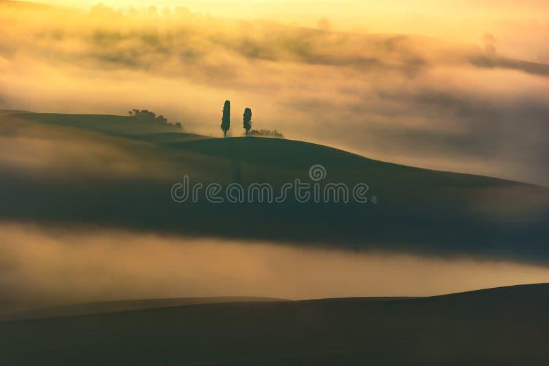La Toscana, due alberi soli e nebbia L'Italia fotografia stock libera da diritti
