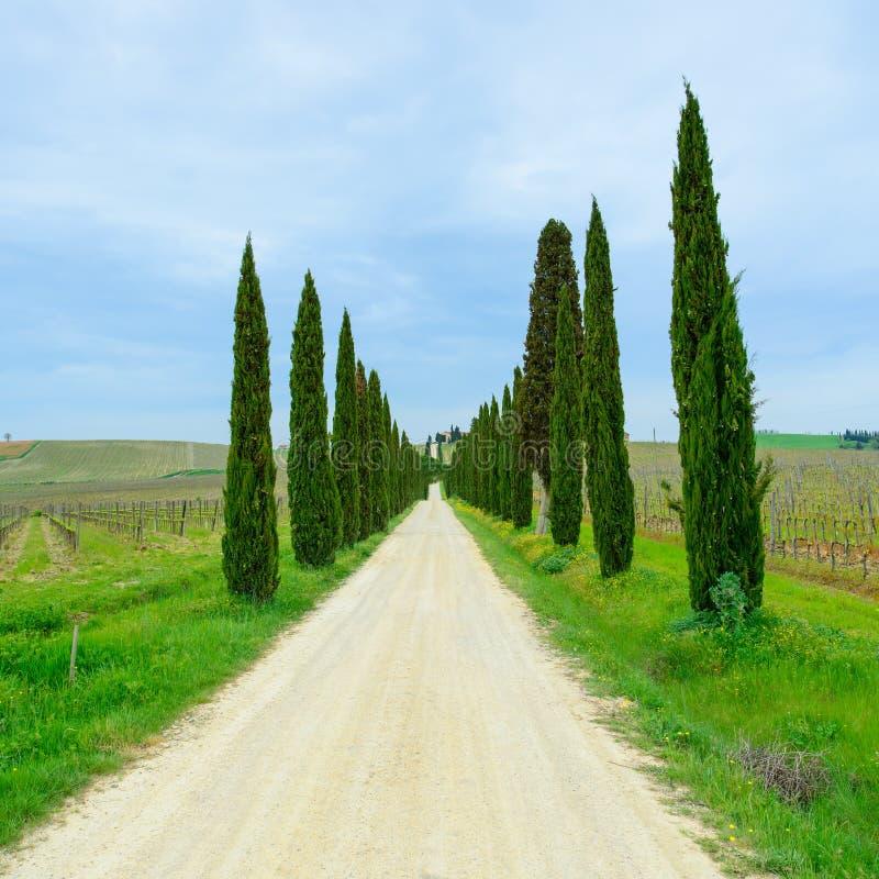 La Toscana, paesaggio bianco della strada degli alberi di Cypress, Italia, Europa. immagine stock
