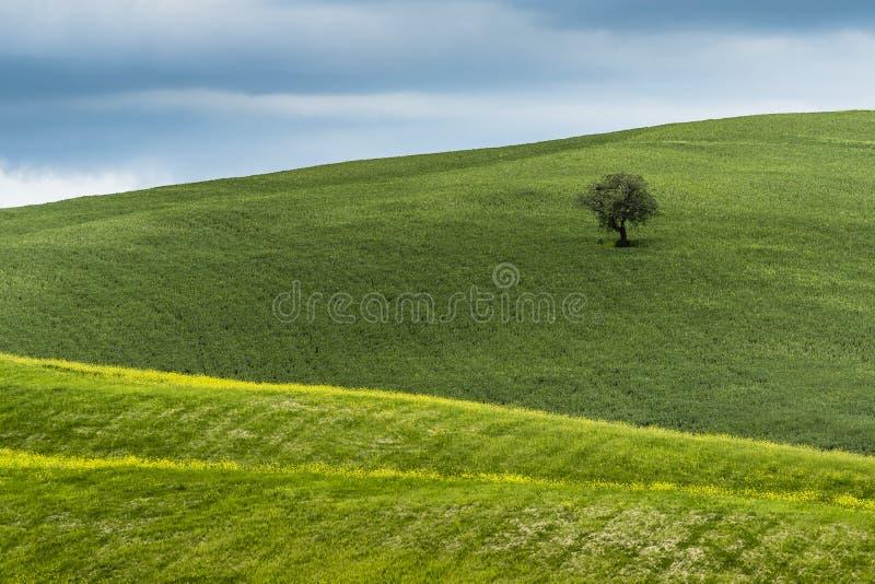 La Toscana, paesaggio essenziale fotografia stock libera da diritti
