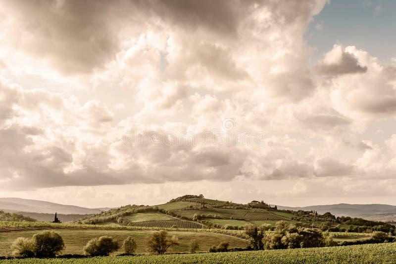 La Toscana - la Rolling Hills e le vigne sotto la città della sommità di Montalcino immagini stock