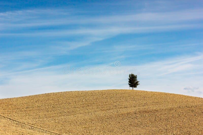 La Toscane - l'arbre isolé photographie stock