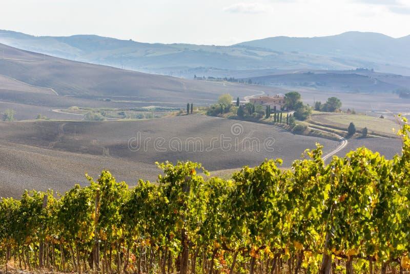 La Toscane - l'Autumn Vineyards photos libres de droits