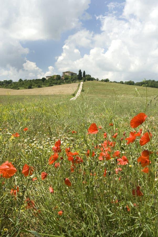 La Toscane magique images libres de droits