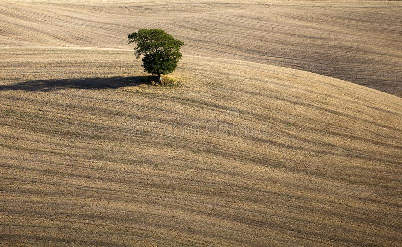 La Toscane - panorama de paysage, collines et pré, Toscane - Italie image libre de droits
