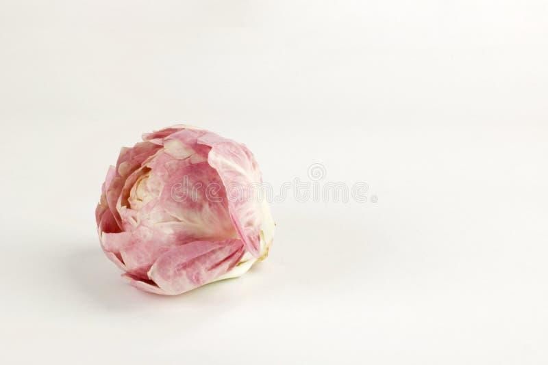 La touffe de la salade rose aiment une fleur sur le fond blanc images stock