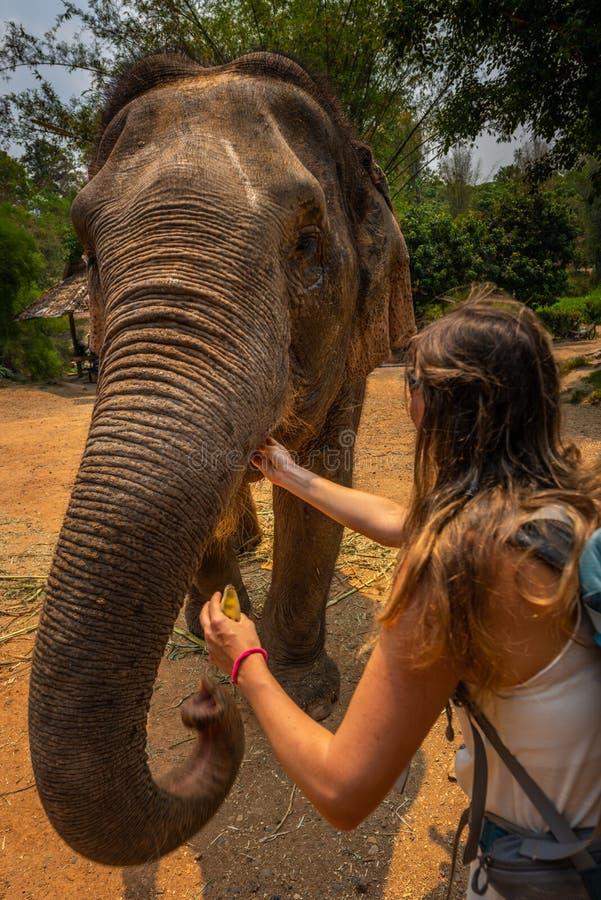 La touriste de fille alimente des bananes à l'éléphant thailand image stock